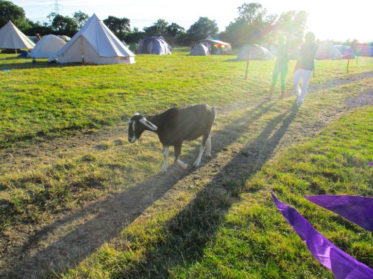 Flo the goat at Cock & Bull Festival 2016